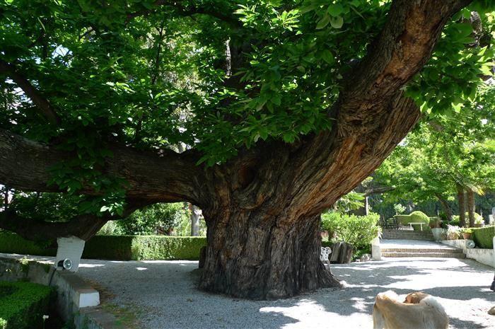 Muller-Gardens-
